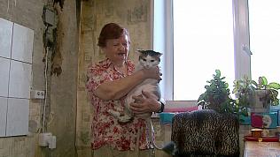 Умный кот спас свою хозяйку от гибели на пожаре