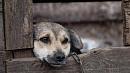 Привязали и били топором по голове: двух южноуральцев будут судить за издевательство над собакой