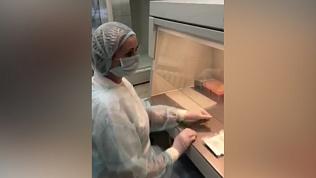 Видео из лаборатории: как проводят анализ на коронавирус
