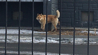 Собака накинулась на челябинку на детской площадке