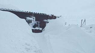 Коровы Кизильского района оказались во власти снежного плена