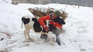 «Сердечный» бычок Бонапарт живет в Челябинской области