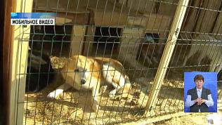 У собак в отлове Копейска подозревают чуму