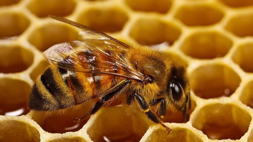 В России могут принять закон о защите пчел от пестицидов