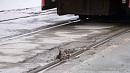 11 участков трамвайных путей планируют отремонтировать в Челябинске в этом году