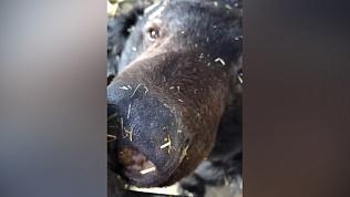 В Челябинском зоопарке мишки проснулись от зимней спячки