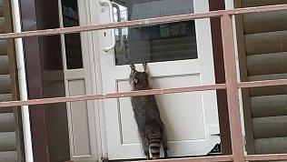 В центре Челябинска енот пытался попасть в магазин