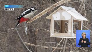 Копейчанка делает необычные фото птиц