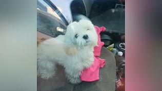 В Златоусте собачка замерзает в машине