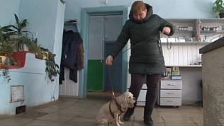 Пострадавшая собака обрела новый дом