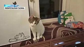 В режиме карантина живут 9 котов