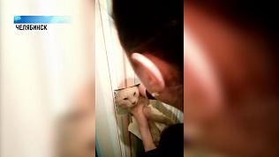 Кота спасли из вентиляционной шахты
