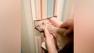 Кота, угодившего в вентиляционную шахту, вызволили в Челябинске