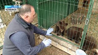 Ветеринар Карен Даллакян приютил трёх медвежат