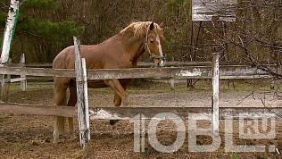 «Мы не можем закрыть конюшню»: конный клуб о работе в период самоизоляции