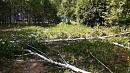 Рабочие пьяные, документов нет: жители «Паркового» пожаловались на незаконную вырубку деревьев