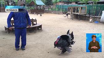 Сотрудник зоопарка станцевал с индюком