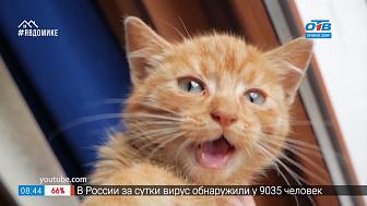 Добавь обороты — кот наплакал