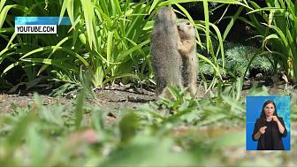 В Ботаническом саду ЧелГУ родились суслики