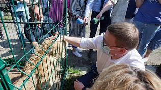 «Это особые эмоции!»: Алексей Текслер впервые в жизни погладил льва в приюте «Спаси меня»