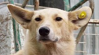 «Санитарные собаки» появились на улицах Челябинска