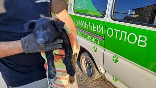 Челябинские зоозащитники спасли из бетонной западни обессиленного щенка
