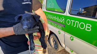 Спасение щенка из щели между домами сняли на видео