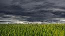 Дожди, грозы и похолодание ожидаются в Челябинской области