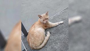 Студенты челябинского вуза спасают кота со сломанной лапой