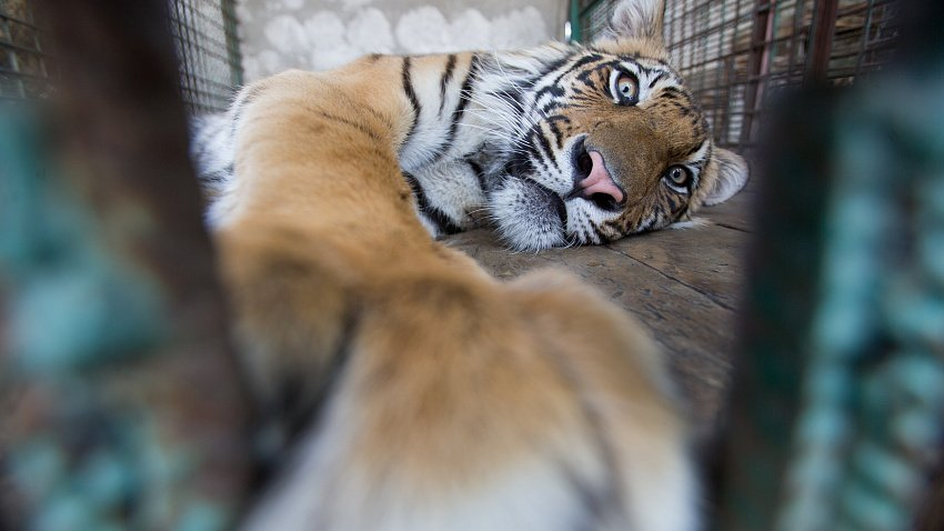 В Челябинской области планируют построить центр реабилитации для диких животных