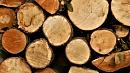 Челябинская область будет продавать древесину на товарно-сырьевой бирже
