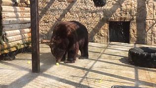 Сотрудники Челябинского зоопарка рассказывают, как животные спасаются от жары