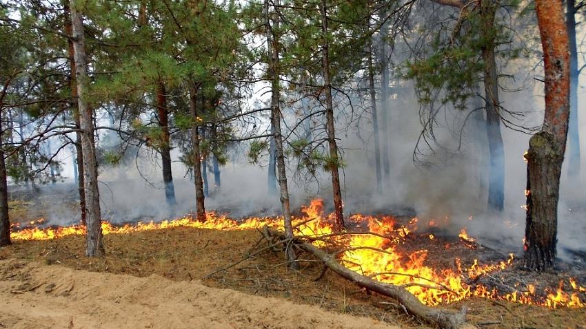 В Челябинской области горели сотни гектаров леса