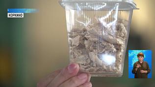 Южноуральские учёные научились улучшать корм