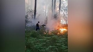 Туристы сняли на видео лесной пожар