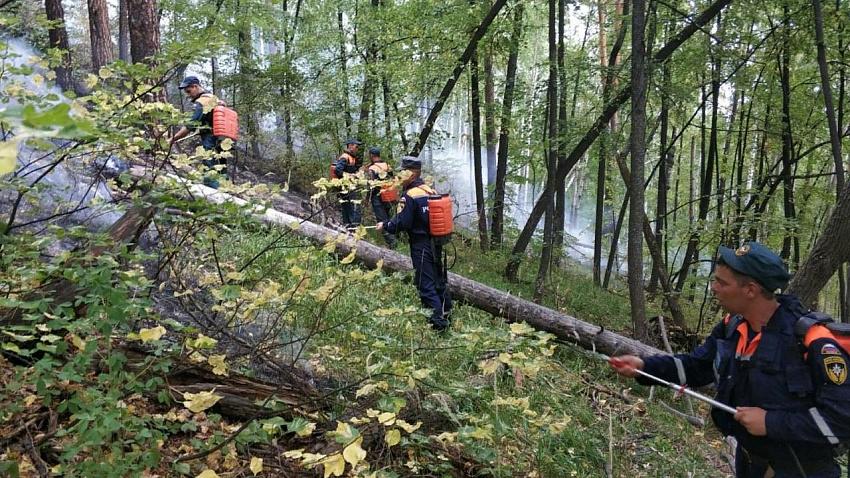 Более 100 гектаров леса пострадало от пожаров в Тургоякском лесничестве
