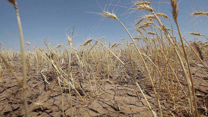 Аномальная жара губит посевы: режим ЧС ввели в восемнадцати районах Челябинской области