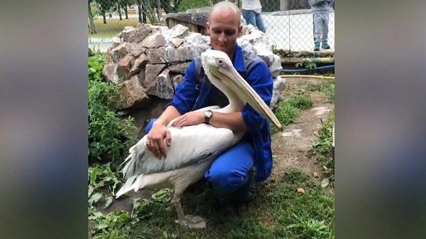 Посетители Челябинского зоопарка зажали пеликану клюв