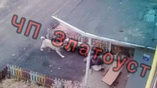 Жуткое нападение бродячей собаки в Златоусте. Видео 18+