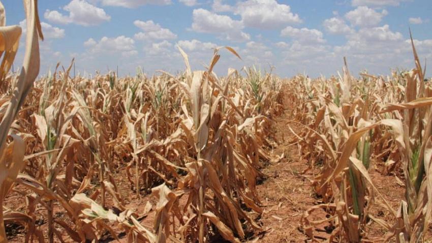 Алексей Текслер ввёл режим ЧС из-за засухи в Челябинской области