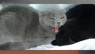 Ветеринарный врач Баграт записал видео с призывом спасти двух кошек