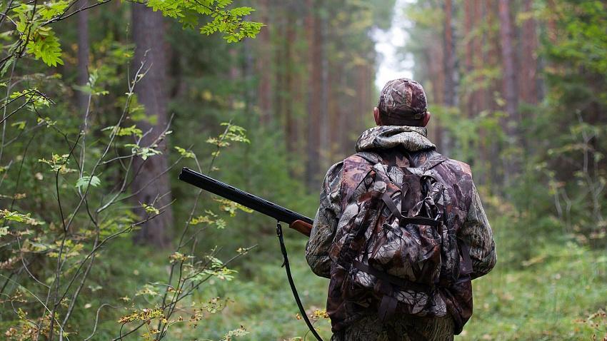 Лимиты на отстрел крупной дичи увеличили в Челябинской области