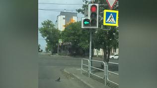 Голубь переходит дорогу на зелёный сигнал светофора: видео автолюбителя