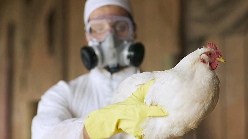 Казахстан ограничил ввоз мяса птицы из Челябинской области