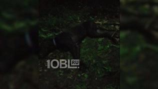 Из-за брошенных после урагана оборванных проводов в Челябинске погибла собака