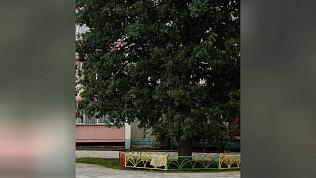 Столичные эксперты обследуют вековые деревья Челябинска