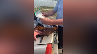 Житель Башкирии пытался провезти наркотическое средство: оперативное видео изъятия