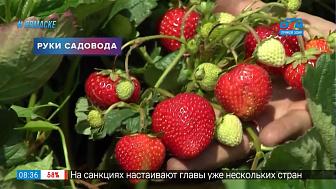 Руки садовода — как вырастить земляничную рассаду