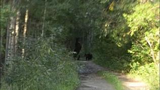 Миасцы встретили медвежат с мамой около п. Михеевка