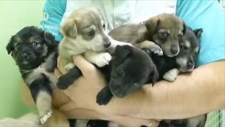 Семь щенков подбросили в ветеринарную клинику: видео с камеры наблюдения